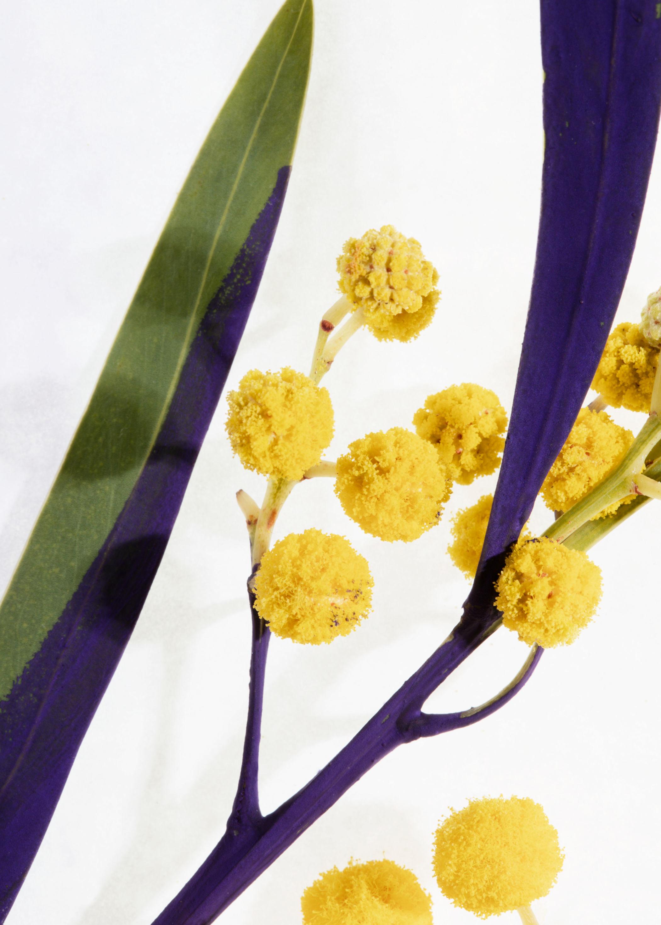 앤 아더 스토리즈 '플뢰르 드 미모사' 바디 수플레 250ml & OTHER STORIES Fleur De Mimosa Body Souffle