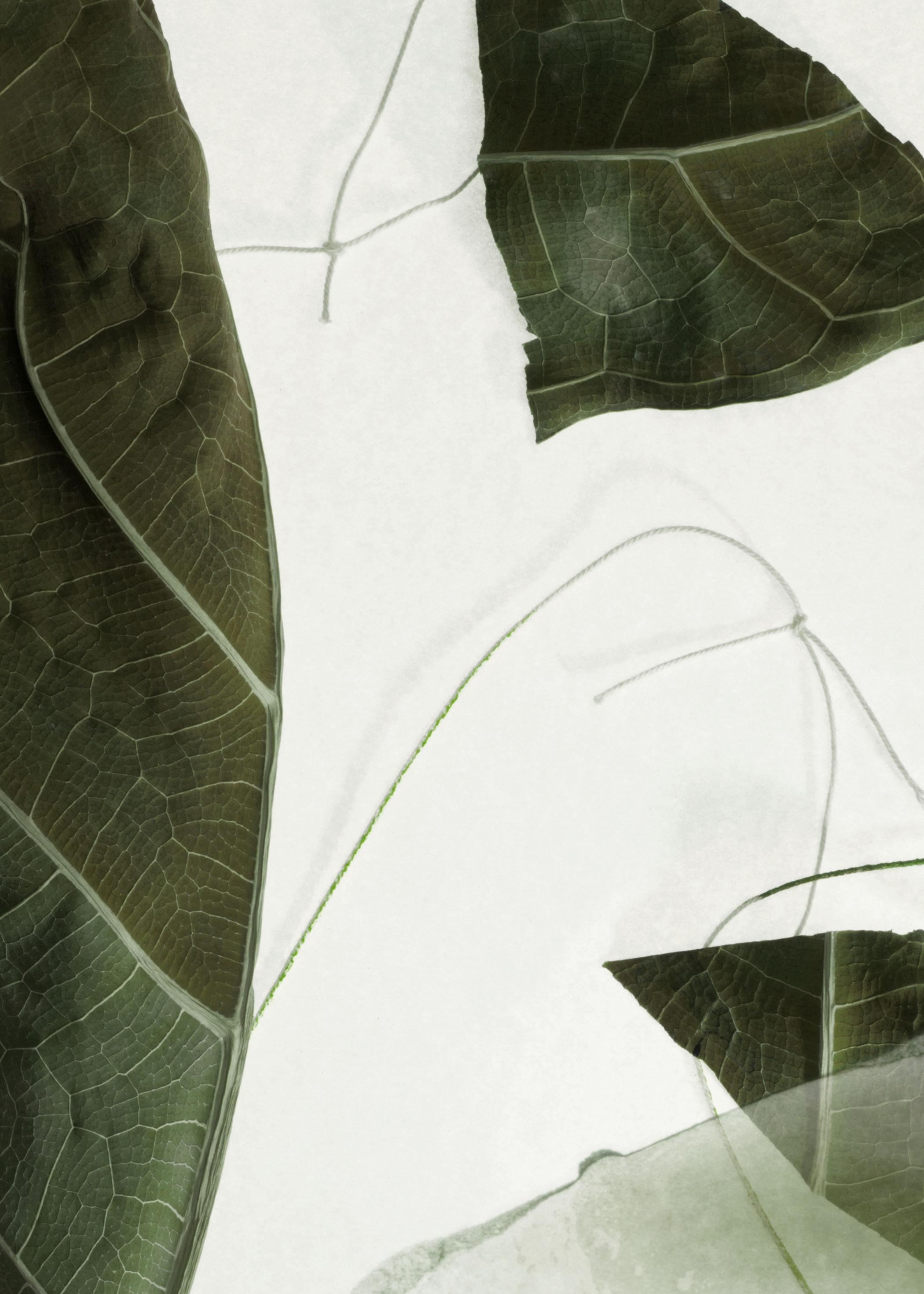 앤 아더 스토리즈 '아라베스크 우드' 핸드 로션 250ml & OTHER STORIES Arabesque Wood Hand Lotion