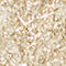 Fabric Swatch image of Stories fuzzy metallic sweater in gold